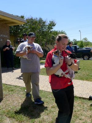 Workers at Abilene's Animal Shelter carry out dogs to the waiting MuttNation bus. The dogs will be taken to Oklahoma then to an adoption event in Nashville.