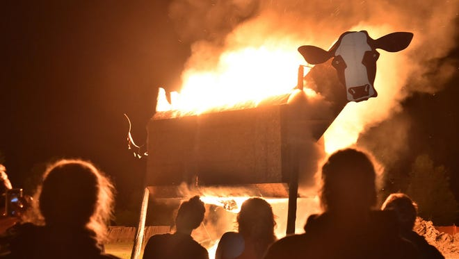 The Burning Cow Music Festival concludes with, as the name indicates, the burning of a 30-foot-tall wooden cow, as seen here in a previous year.
