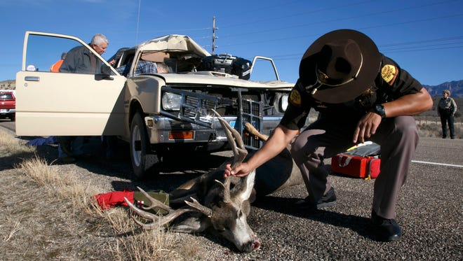 Utah Highway Patrol Trooper Joe Pastor examines a buck that collided with a late-model Isuzu pickup truck in an attempt to determine what part of the animal struck the driver of the truck as the deer lies dead on the side of state Route 18 near Diamond Valley Wednesday, Dec. 2, 2015.