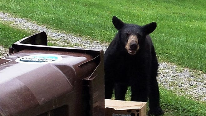 A reader asks if it's OK to shoot a bear rummaging through trash cans with rubber bullets.