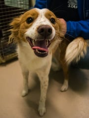 Destiny at the Cumberland County SPCA on Wednesday,