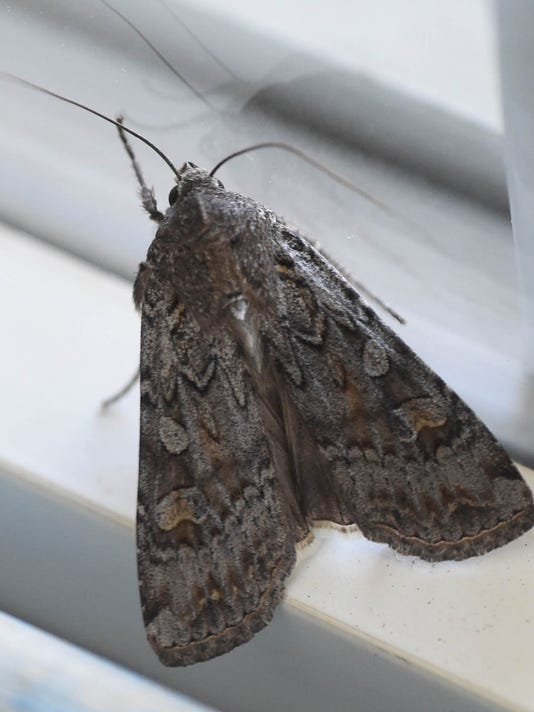 -REN0609 Moth 2.jpg_20140609.jpg
