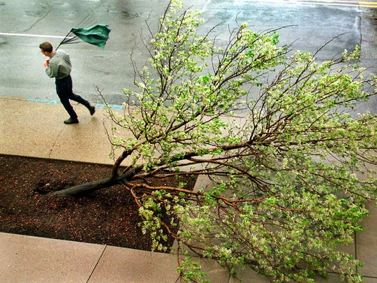 John Sanders of Fishers fought high wind and rain, as he walked past a downed tree with his broken umbrella in Downtown Indianapolis on April 16, 1999.