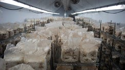 Mushrooms are grown in the former W.B. Bottle Co. plant