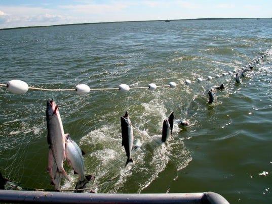 636477569562388251-Salmon-gill-net.jpg