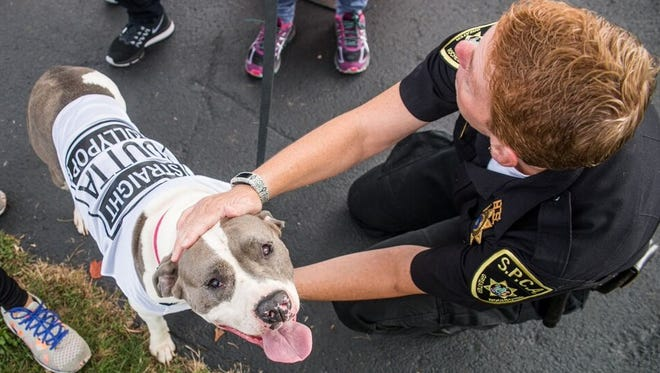 "Sporting her ""Straight Outta Lollypop"" tee and showing off her good manners, Relic visits with Officer Jill LaPorte during a recent event at Lollypop Farm."