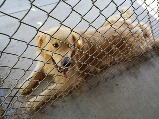 One of the 37 dogs seized from a Town of Wilson home