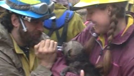 A photo taken from video shows a rescued wolf pup being treated.
