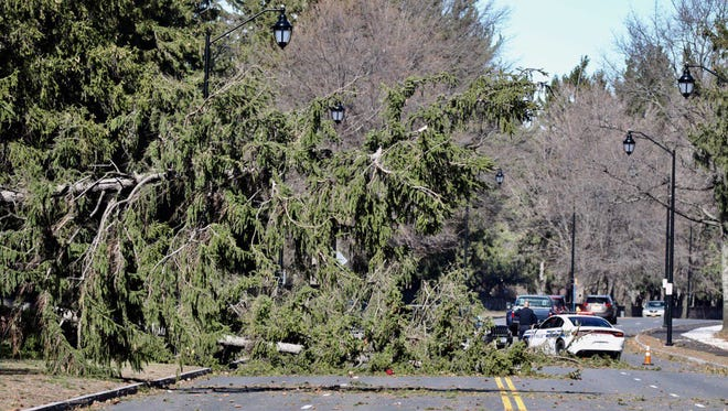 Several pines fell on Lake Avenue at Holy Sepulchre Cemetery on Wednesday afternoon.