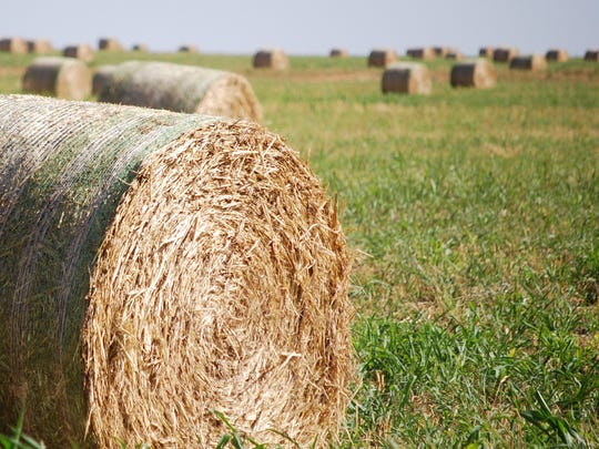 Hay operation resilience and flexibility during tough