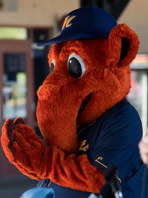 Montgomery Biscuit mascot Big Mo unveils his new physique, on Thursday March 22, 2018, after working out during the off season.