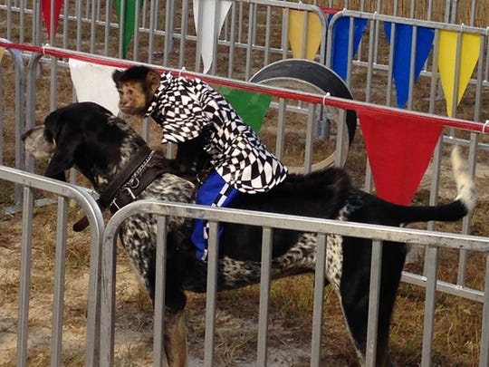 The Fair at Fenway South features its popular Banana Derby - yes, monkeys racing on dogs.