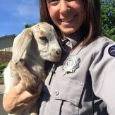 Baby goat found wandering around in Arvada
