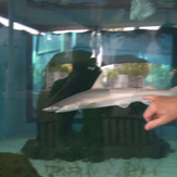 Shark at Mote Marine Laboratory