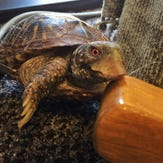 Turtle finds home in Lakewood bookstore