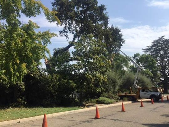 Two oak tree branches fell onto two homes in the 1400