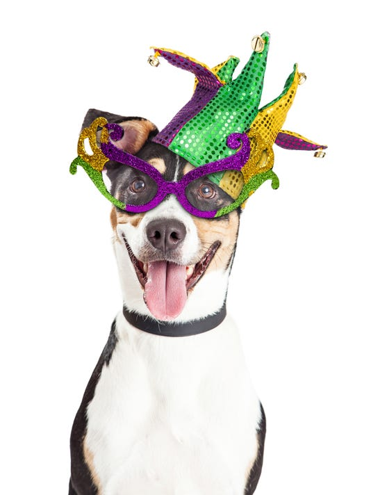Funny Dog Dressed For Mardi Gras