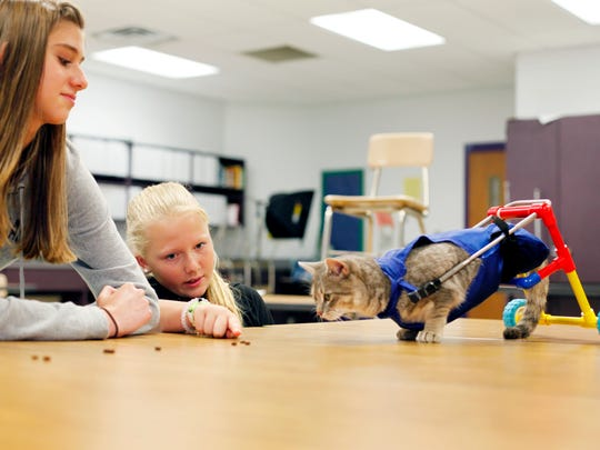 Emmy Saltzman, left, and Hayli Owens entertain Clark the cat as he tries out the new cart the students helped design for him Thursday.