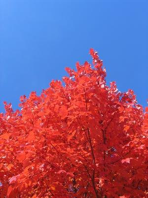 Fall color in Grosse Pointe Farms, Michigan.