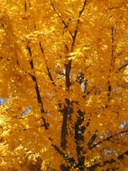 Fall color in Grosse Pointe Park, Michigan, in this file photo.
