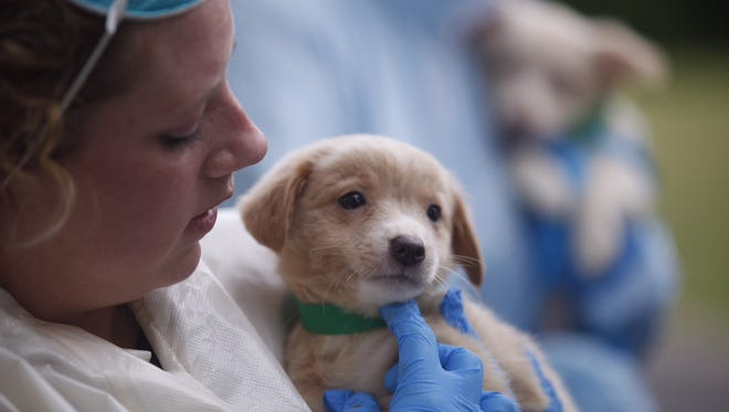 A puppy rescued from a Howell home Friday.