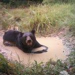 Photos: Wildlife caught on trail cameras