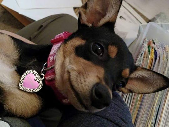 Rosie, a one-year-old mix, died Monday after being shot by a pellet gun outside her Salem home.