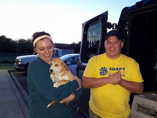 Allan Chapman, at right, loads the van with dogs in Alabama, preparing to drive through the night to bring them to new homes in Wisconsin.