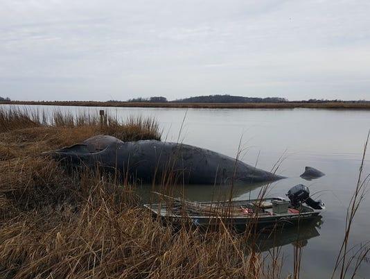 636289813814376547-whale-river-creek.jpg