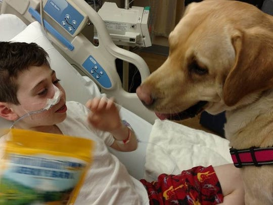 Louie, one of Sue DesMarais' therapy dogs, cheers up a boy at a local hospital.