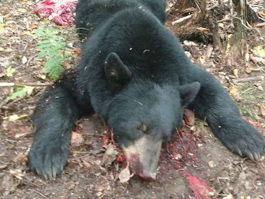 Terry Weldvogel shot this nice bear during hte 2017