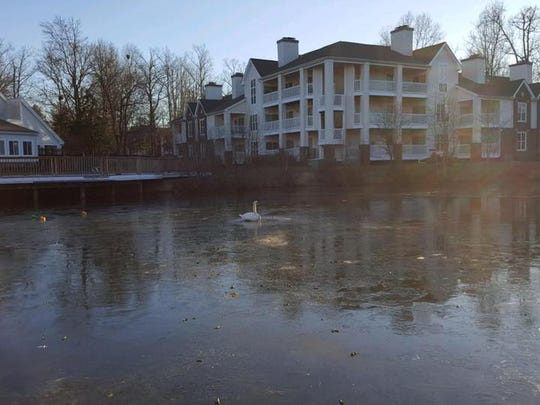 Firefighters in Virginia's capital freed a swan stuck