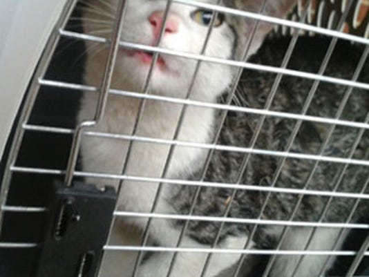 Keep your pets safe while riding in the car by using a carrier or seat belt harness.