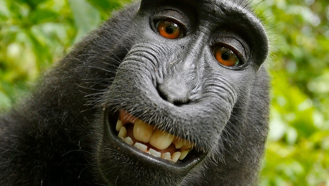 Naruto, a macaque, took this self-portrait in 2011 after photographer David Slater set up the camera in a wildlife park in Indonesia. Slater was later sued by People for the Ethical Treatment of Animals. A federal appeals court ruled in that case recently.