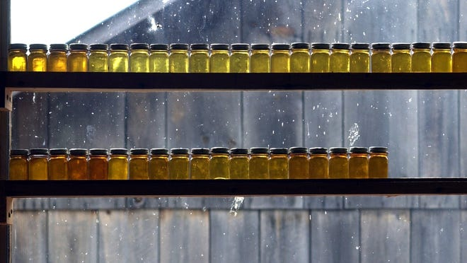 Rows of samples of maple syrup produced in Starksboro.