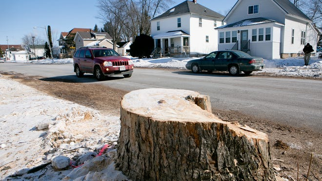 A tree stump is seen on the 500 block of South Maple Avenue on Thursday.