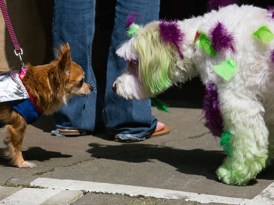 Earthlings are not the only ones invited to take part in the extraterrestrial extravaganza. Proud pet owners are encouraged to dress up their furry and feathered friends for the Alien Pet Costume Contest 3:30 p.m. Saturday, May 14.