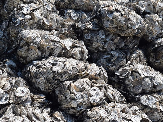 Aged oyster shells await delivery for use in a living shorelines project. Eighteen restaurants helped the Delaware Center for the Inland Bays collect over 2,000 bushels of oyster shells.