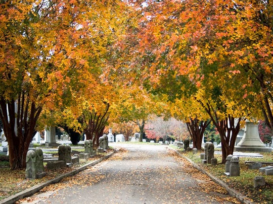 In most years, the leaves of crape myrtles trees in Elmwood Cemetery turn shades of yellow, orange and red. This year they are still green.