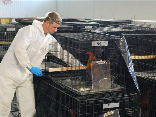 The Animal Rescue League of Iowa seized 85 chickens