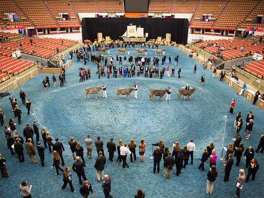 Teams from across the country circle the show rings inside the Coliseum to evaluate cattle during the National 4-H Dairy Cattle judging contest at the World Dairy Expo.
