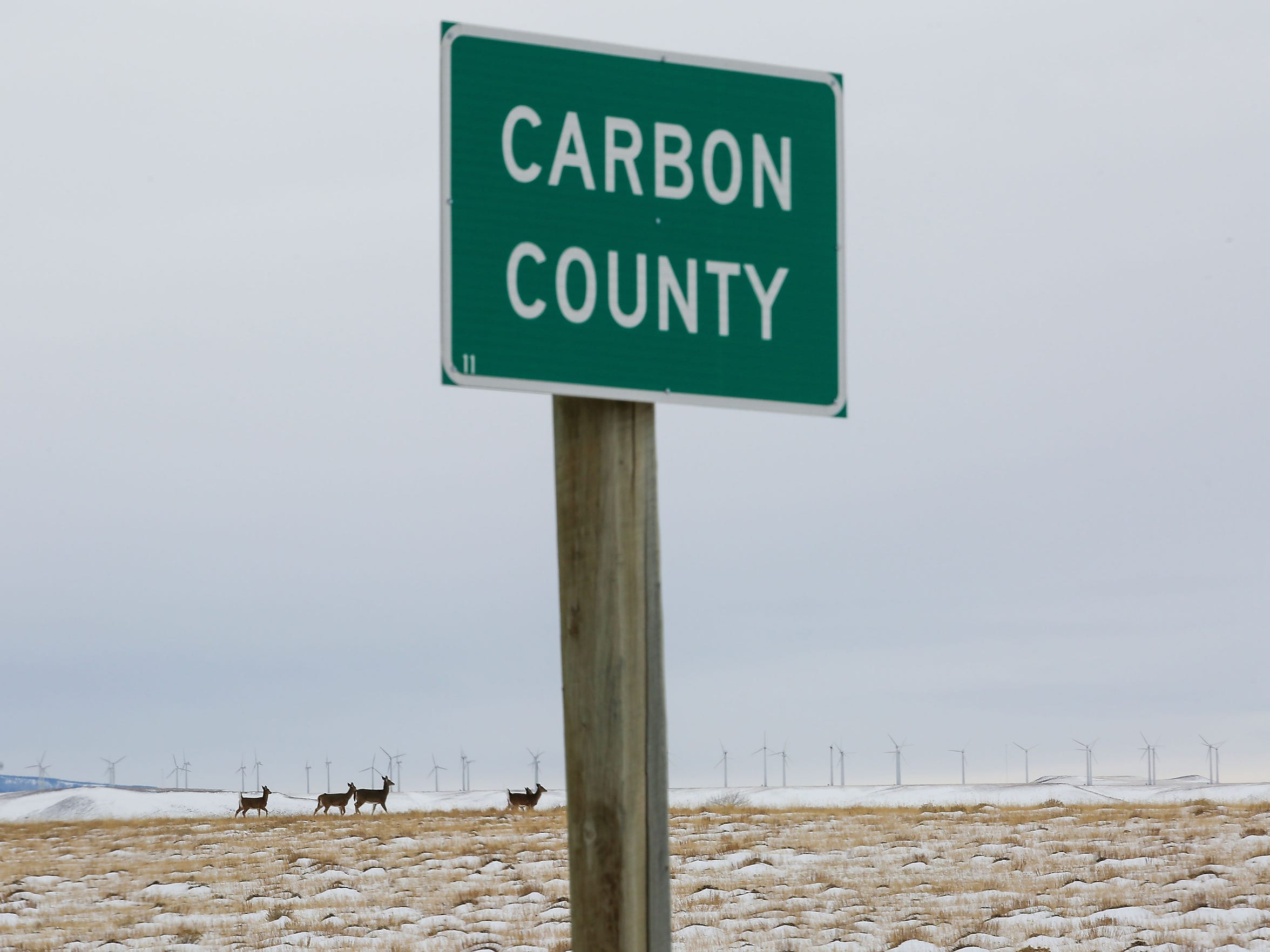 Deer run through the open landscape in Carbon County,