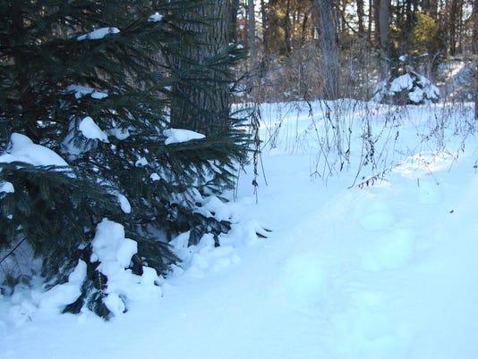 635875058566351985-01.10.16---Snowy-Footprints.jpg