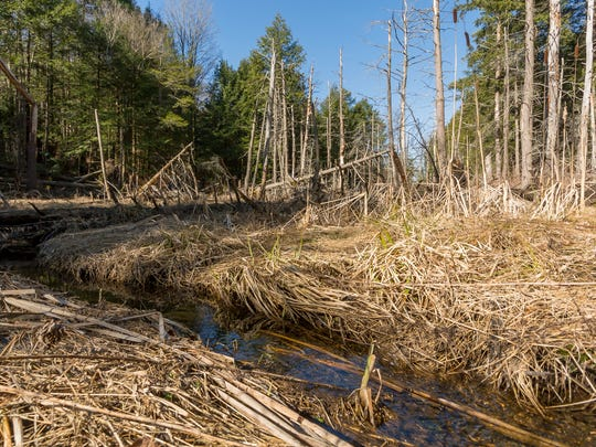 One of two tributaries to Six Mile Creek on an ecologically significant, 126-acre property that the Finger Lakes Land Trust is going to acquire in the Town of Dryden.