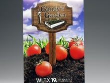 A packet of Brandywine tomato seeds distributed by News19.