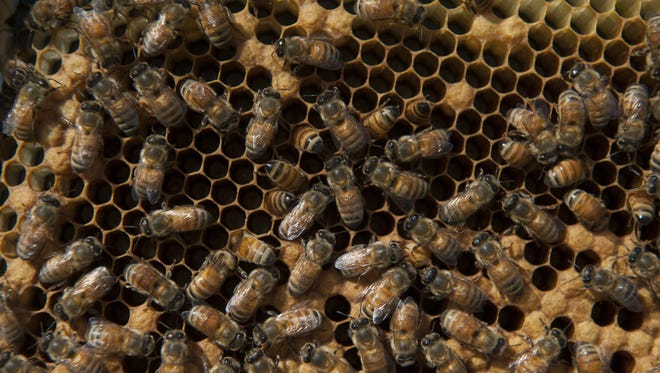 The Delaware veteran will receive training and mentoring in beekeeping as part of the Department of Agriculture's Planting Hope Apiary project.