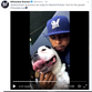 Domino, the dog belonging to Brewers reliever Jeremy Jeffress, is officially a star