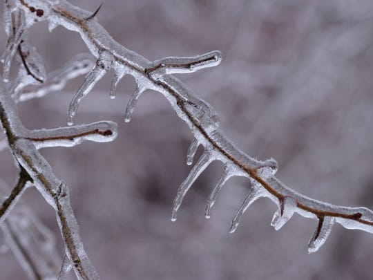 Ice covering a branch after a freezing rain storm.