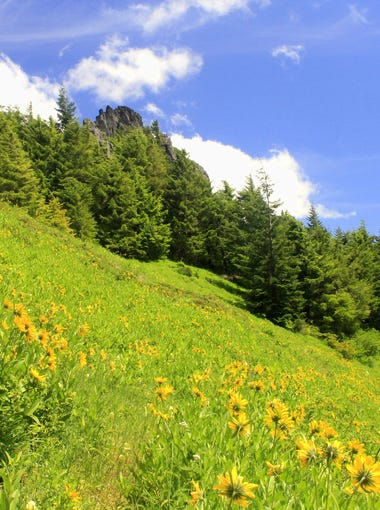 Wildflowers and views dot the route up Rooster Rock in the Table Rock Wilderness.