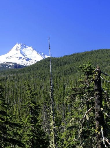The Ruddy Hill Loop takes hikers around Olallie Lake and into the backcounty on a tour of views and lakes.